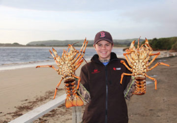 Crayfish like these are not hard to find.